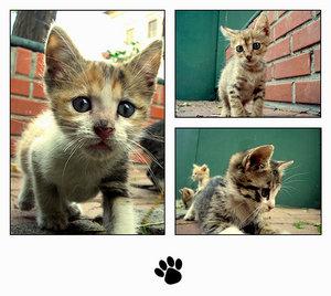 Meow I by KittenPride