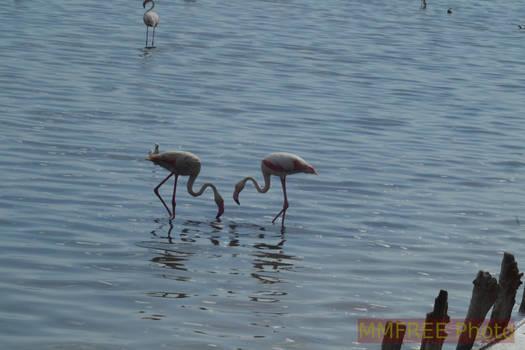 Another flamingo shot