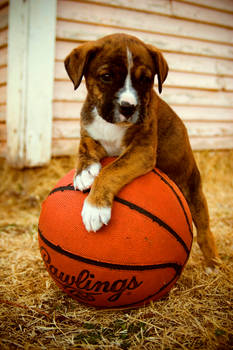 Gonna Be A Ball Player