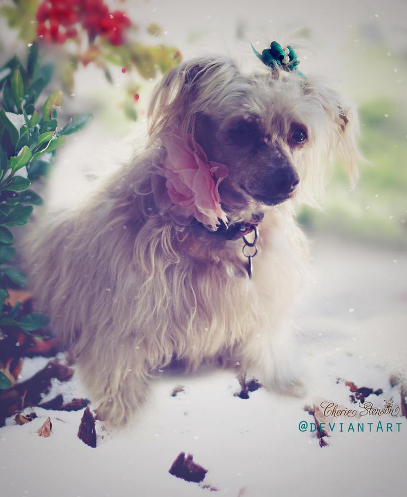 My Rosie by cherie-stenson