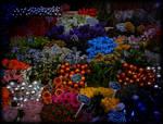 Abundance of seasonal colours