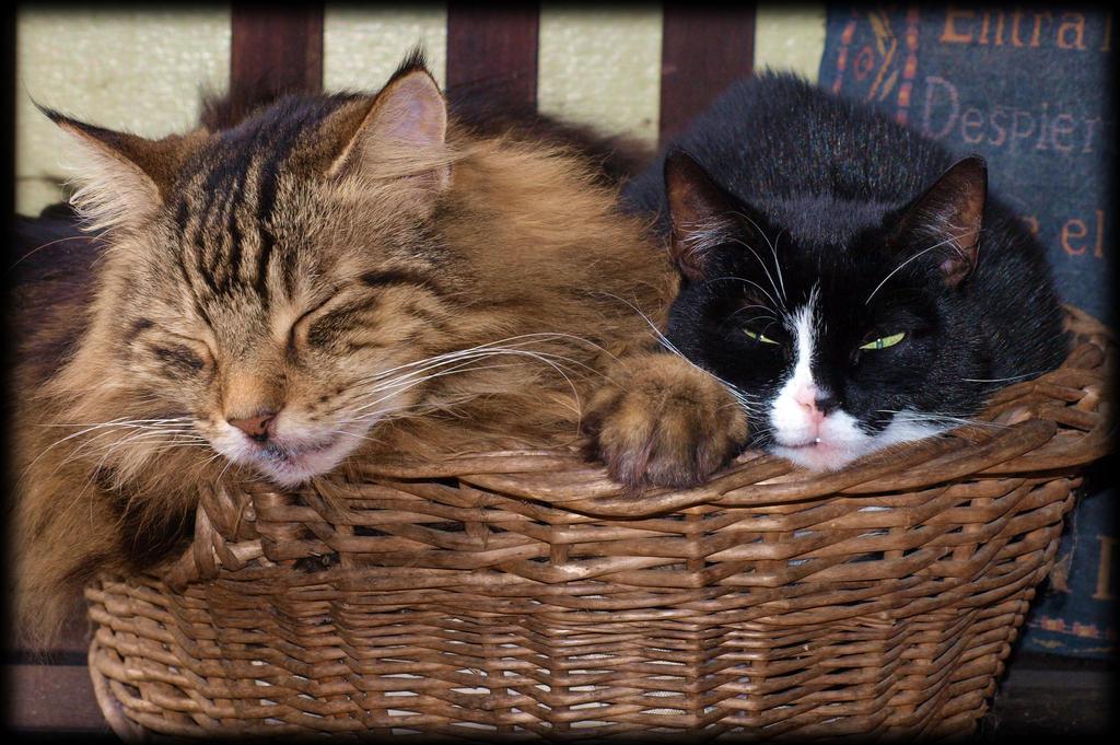 Close encounter of cats