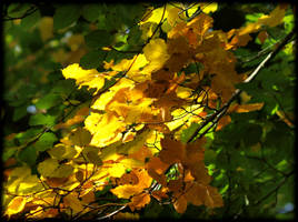 Beauty of Autumn leaves