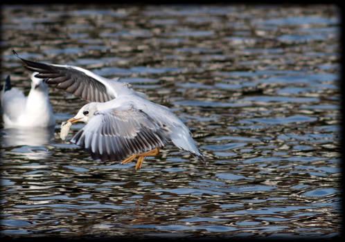 Air braking seagull