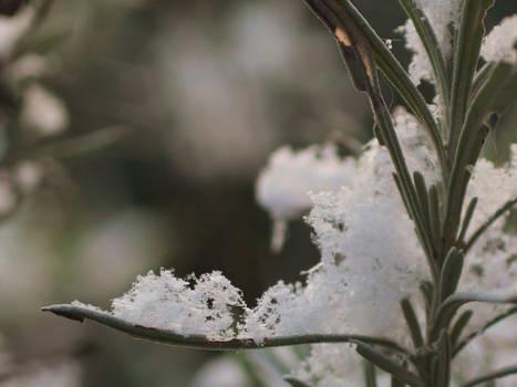 Snow crystals III
