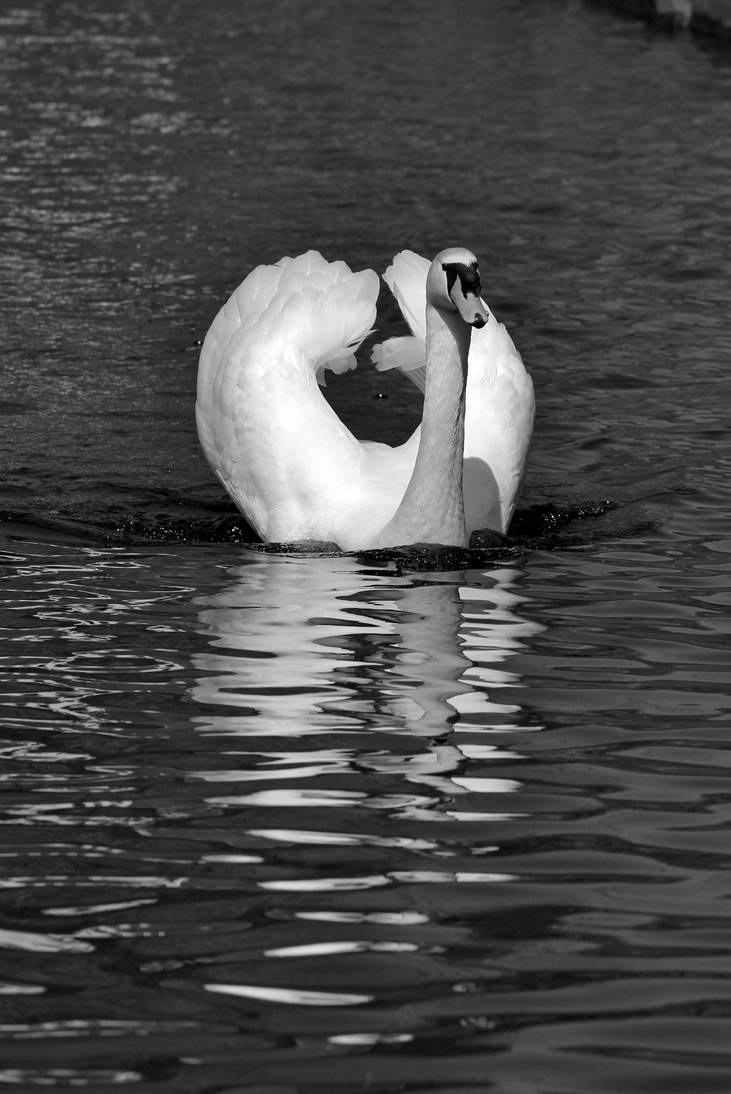 Swan snapshot by pagan-live-style