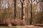 Groenendaal with the Chinese TTartisan 50mm lens