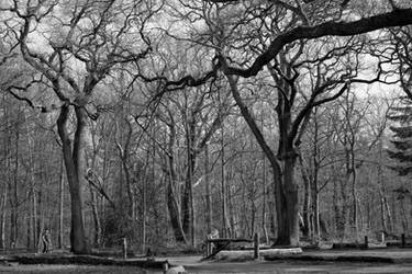 A forest of branches