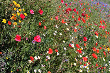 Crowded with wild flowers