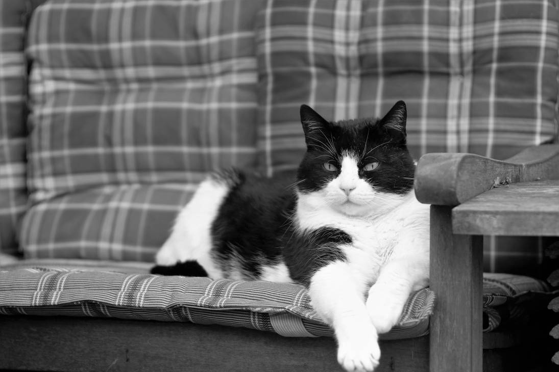 Our lazy garden couch cat Putty