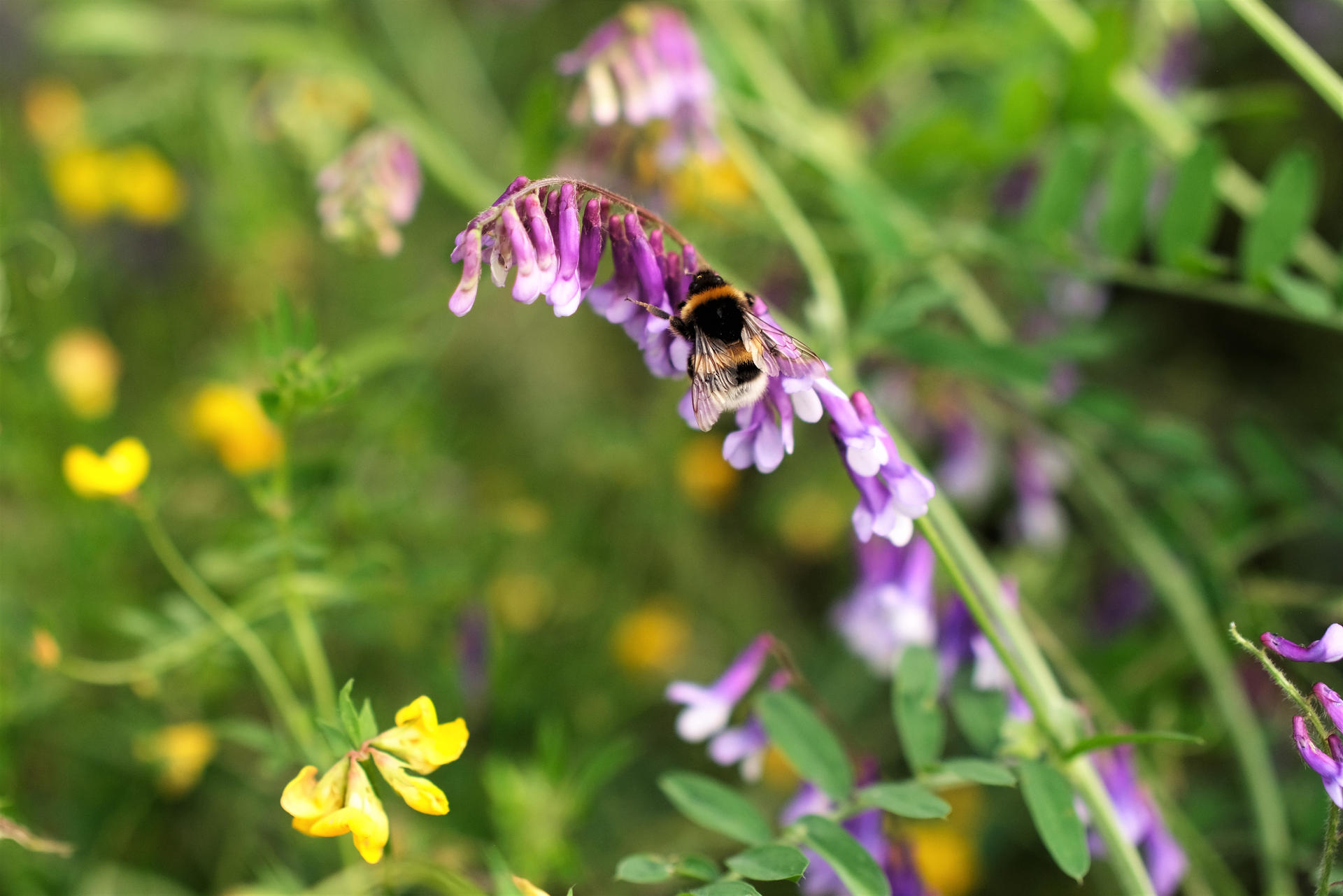 wild flowers and bee