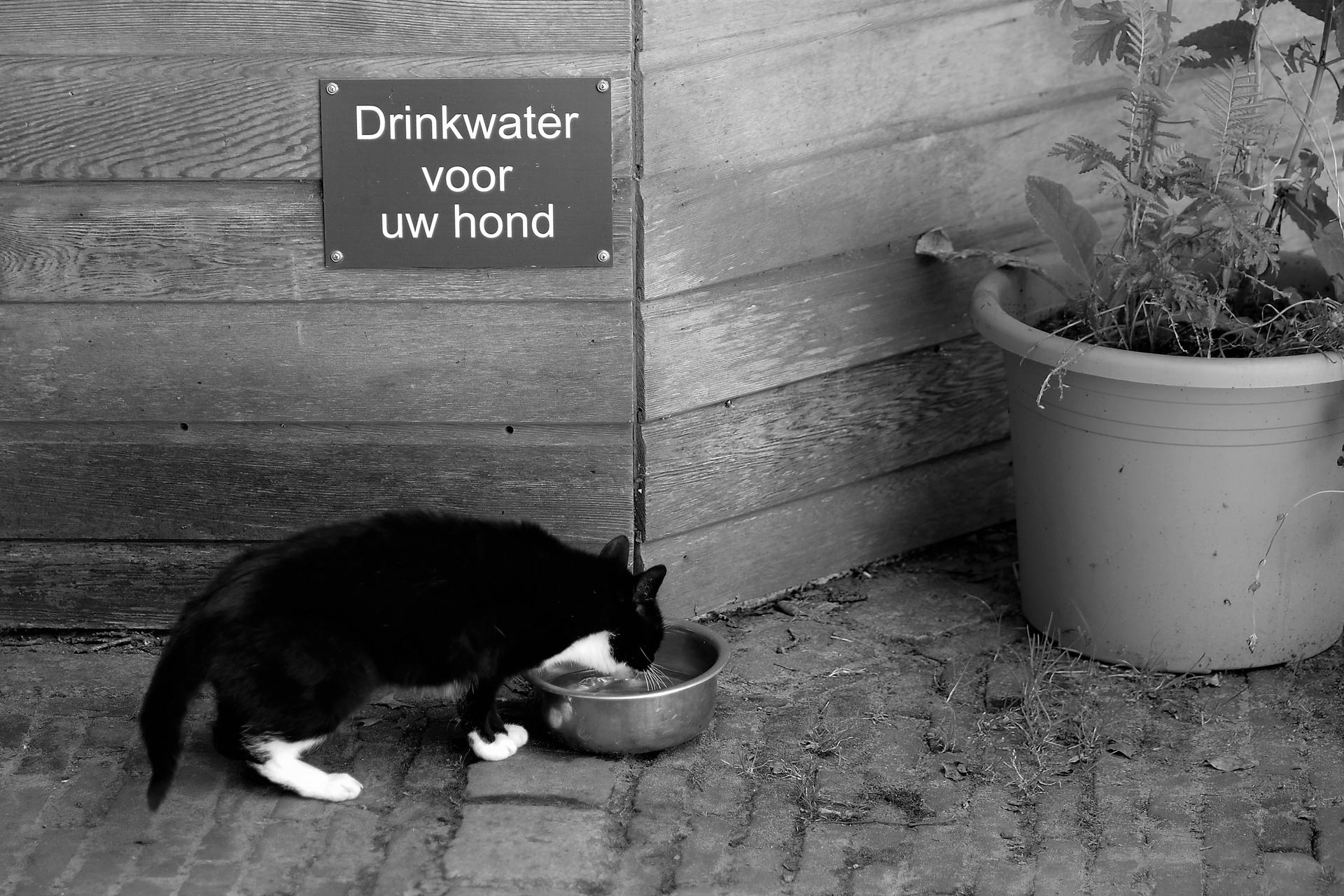 Drinking water for your dog