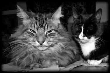 Dutchy and Mimi