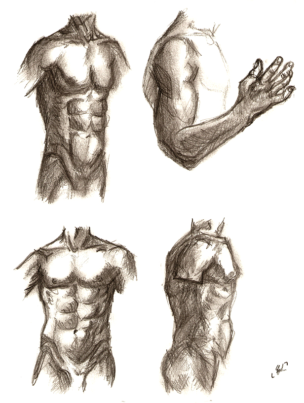 male torso - study by zimtxstern