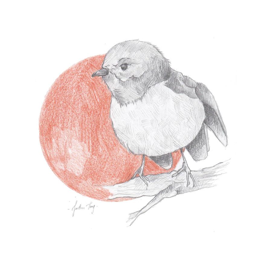Sketchbook 002 Fat Bird by BombinArt