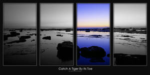 Catch A Tiger By Its Toe by AB-Photography