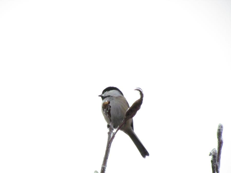 bird in winter4 by tibit111