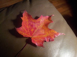 Smoldering Maple Leaf