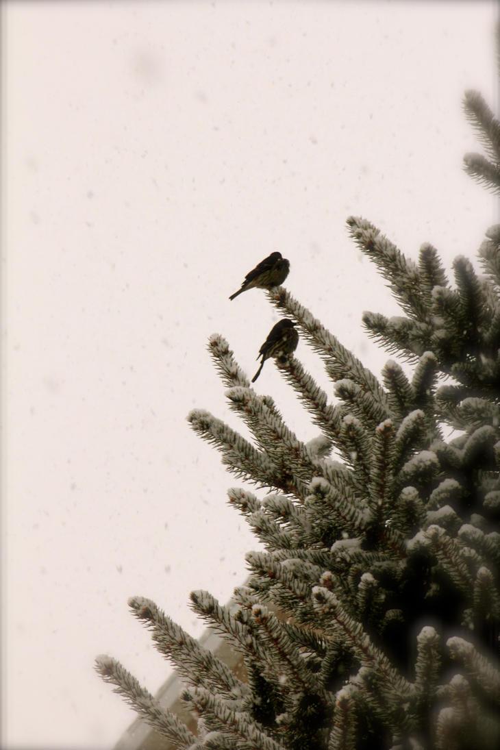 My companion in the storm by hannahjanelee on deviantart for 2 little birds sat on my window