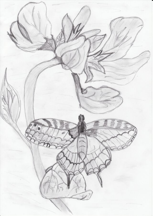 MOTYL nice good draw butterfly by pazio141 on DeviantArt