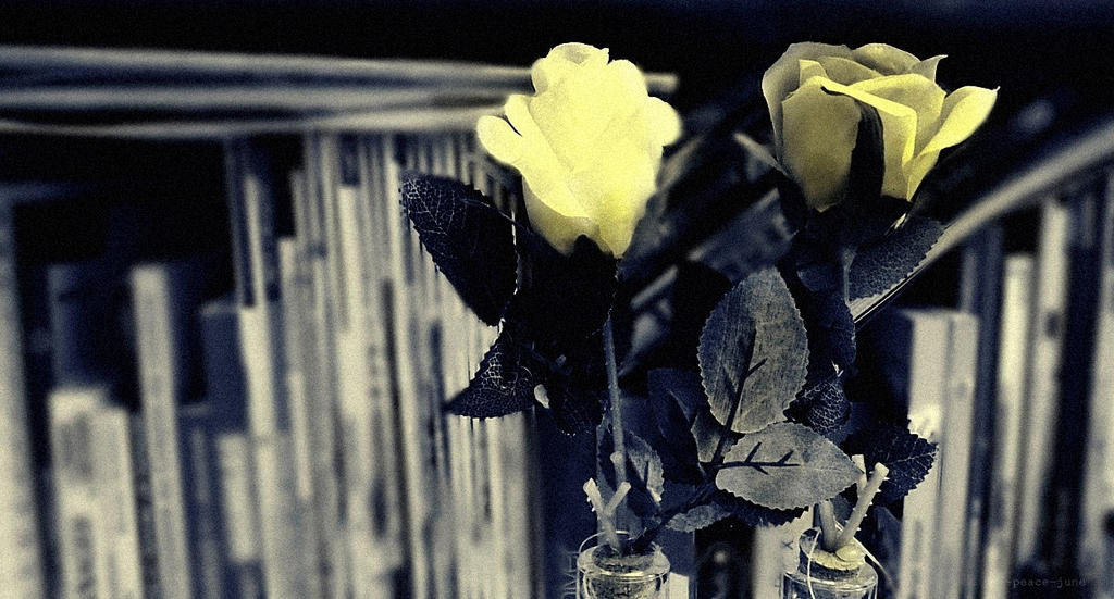 Vintage and Roses by Peace-June
