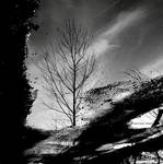 .:reflection :.