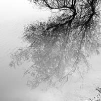 .:reverie:. by neslihans
