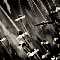 .:dancing in the wind:. by neslihans