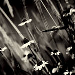 .:dancing in the wind:.