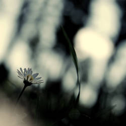 .:soft:. by neslihans