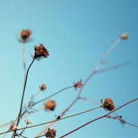 .:blue fall II:. by neslihans