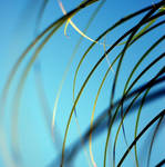 .:green and blue:. by neslihans