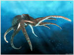 Octopus by CanisLoopus