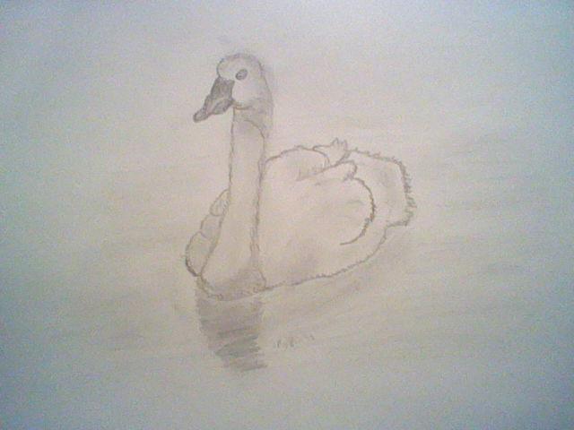 realistic swan by Nata-Chann