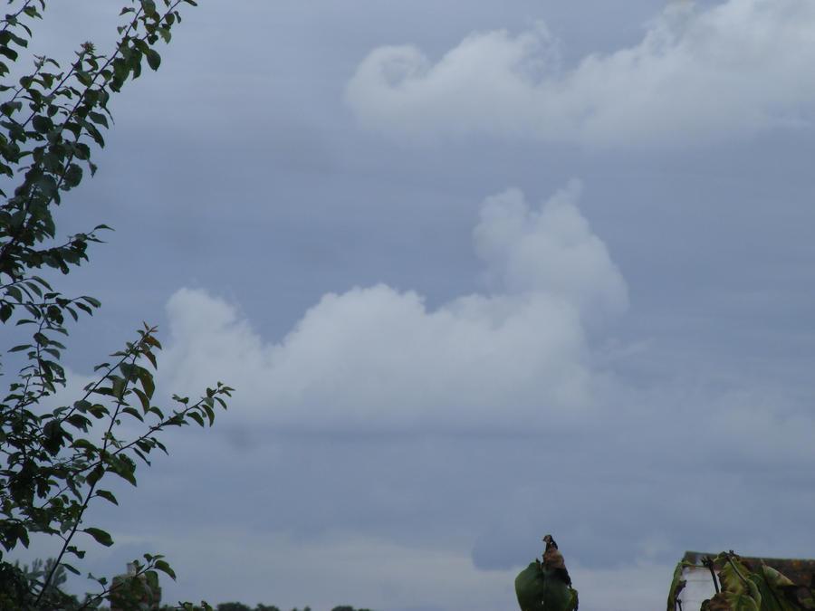 One Day I Saw a Cat in the Sky... by frasierdalek
