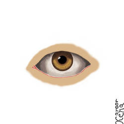 An high quality (kind of) eye! (study)