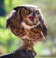 Great Horned Owl by jennalynnrichards