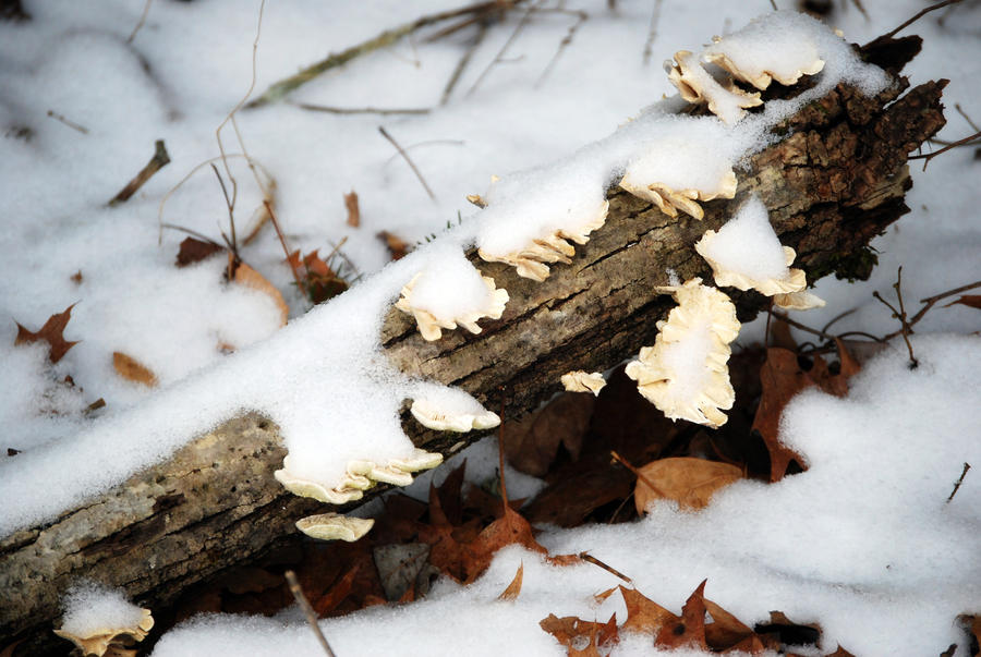 Frosty Log by jennalynnrichards