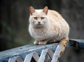 Stray Feline II by jennalynnrichards