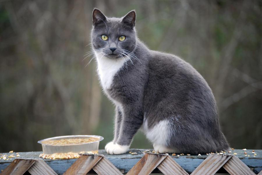 Stray Feline III by jennalynnrichards