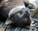 Kitty Staredown