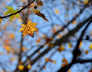 Yellow Leaf by jennalynnrichards