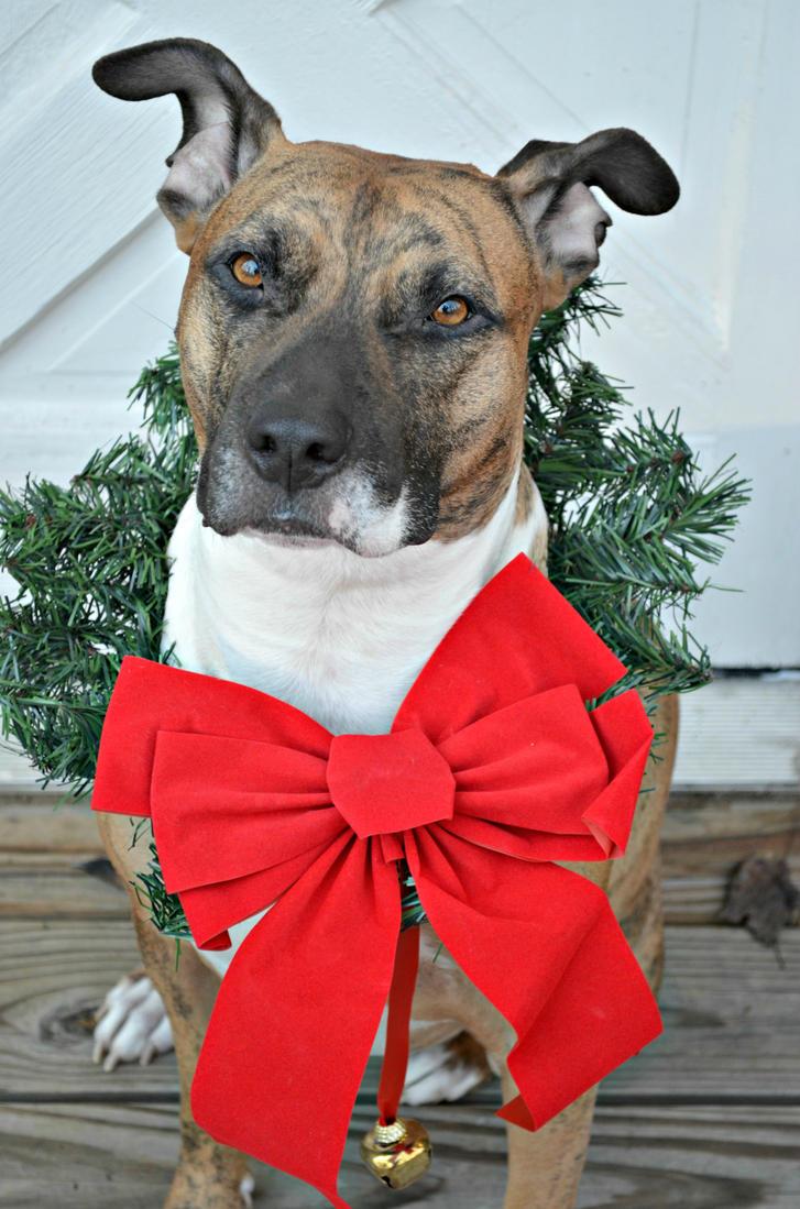 Bowser Christmas Portrait 2 by jennalynnrichards