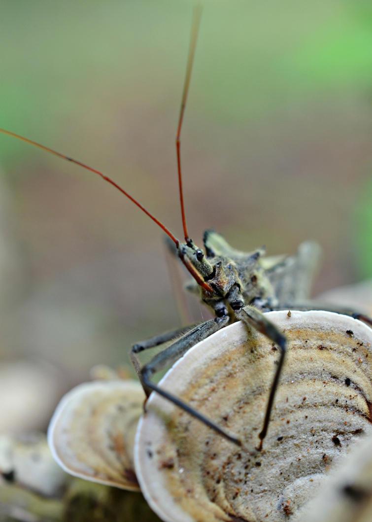 Stinky Bug by jennalynnrichards