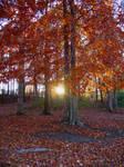 Autumn Sunset by jennalynnrichards