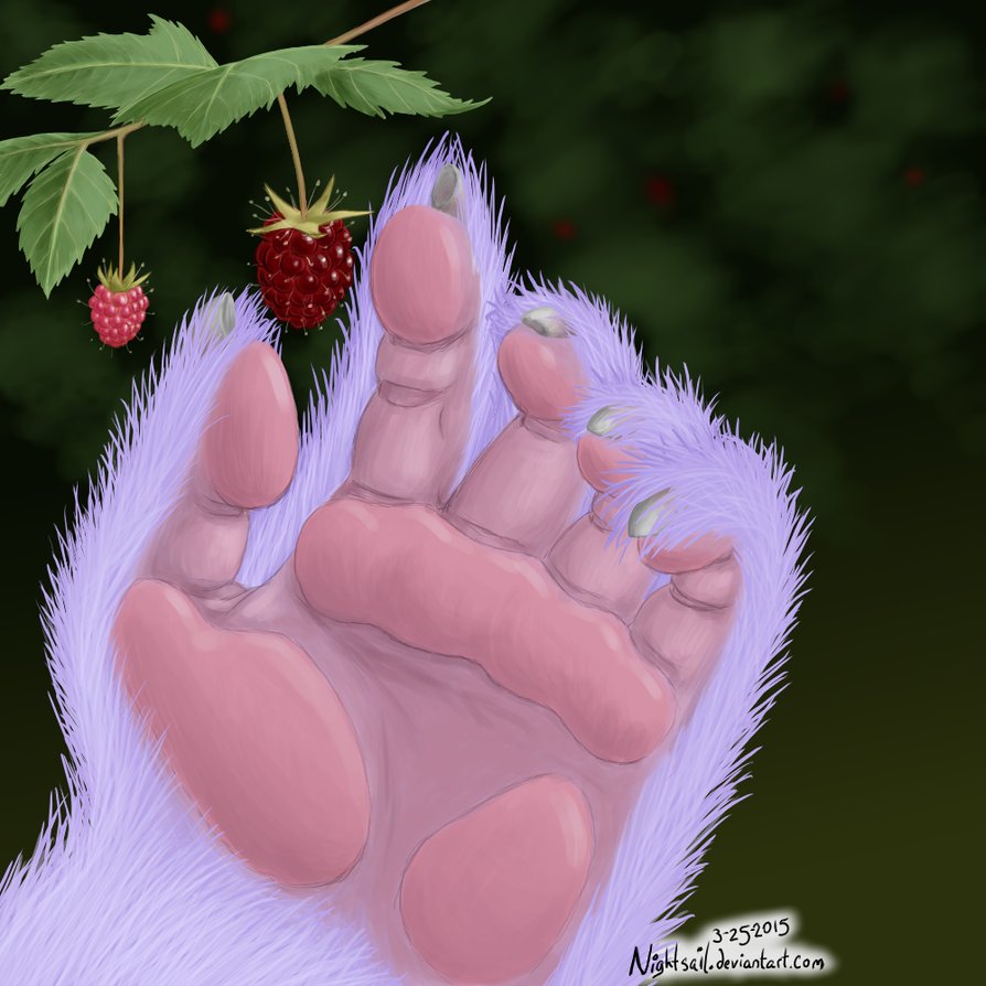 FB - raspberries by nightsail