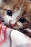 Sweet eyes by RikaAi