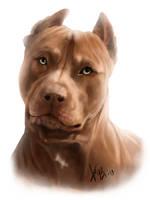 Red Pitbull Portrait by RedEyedDemon