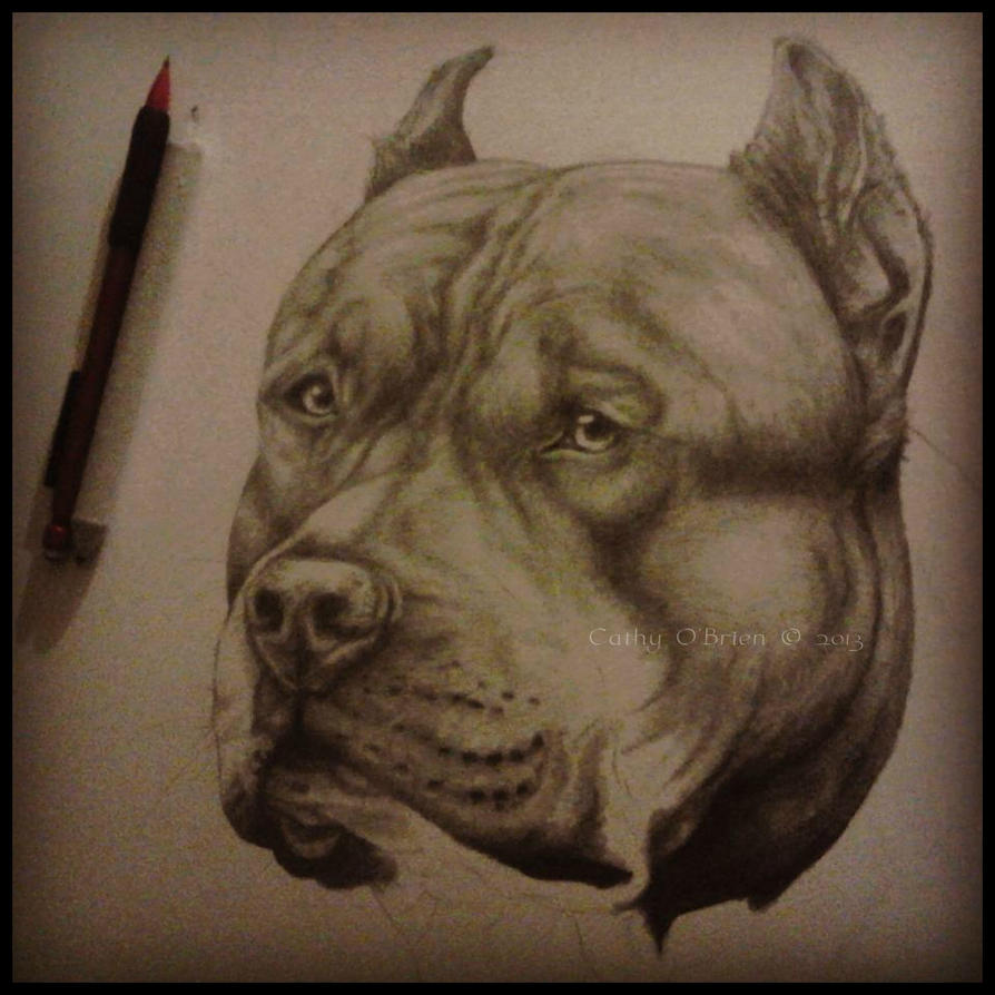 American Staffordshire by RedEyedDemon on DeviantArt