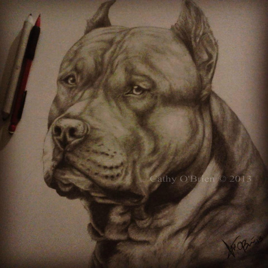 American Staffordshire: Finished by RedEyedDemon on DeviantArt